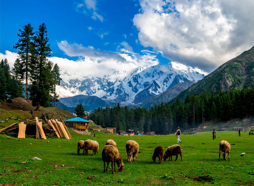 Fairy Meadows - Adventure - A Different Agenda